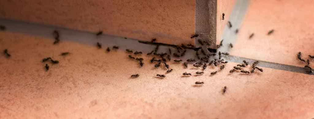 Места обитания муравьев