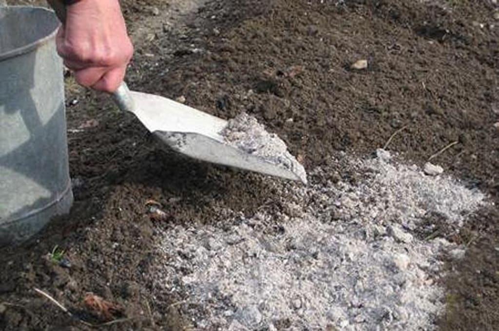 Обработка почвы золой