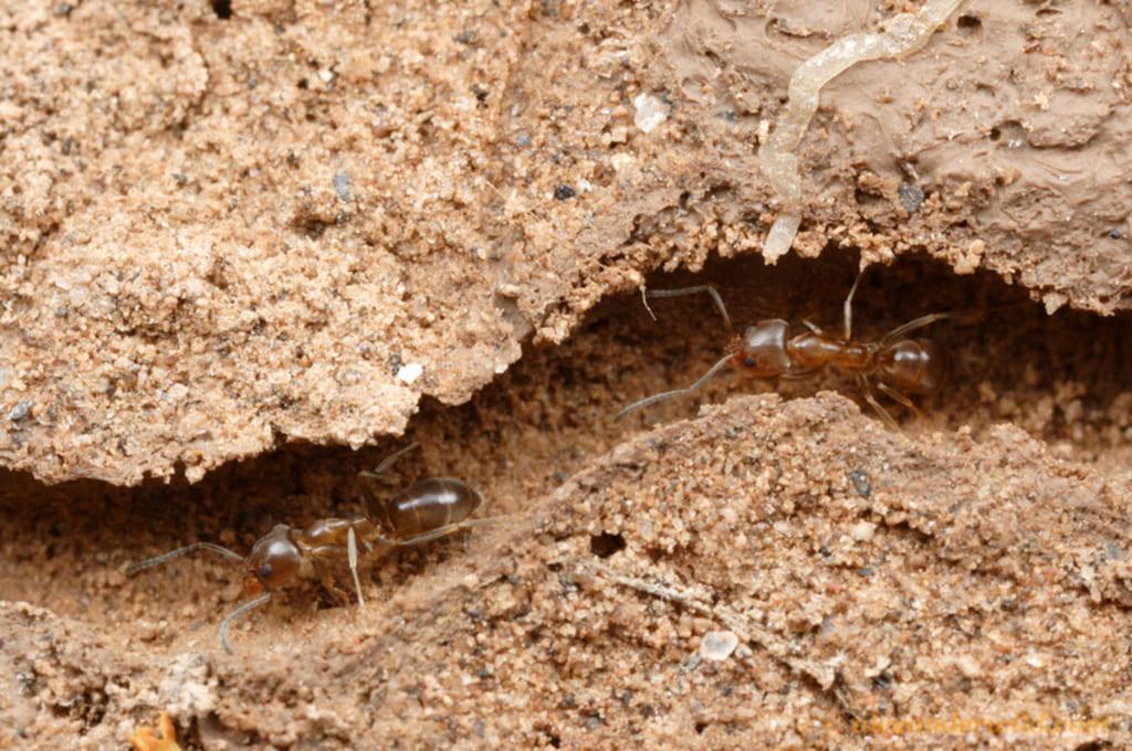 Польза насекомых. Улучшение питательности грунта
